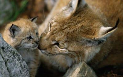 Welt-Artenschutztag: WWF fordert Rettungspaket gegen Artensterben