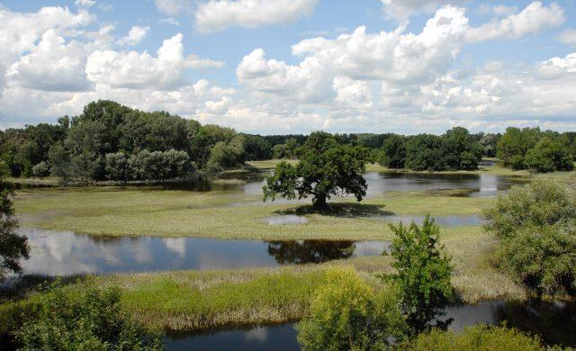 WWF fordert Bodenschutz und Renaturierungen gegen Hochwasserrisiko